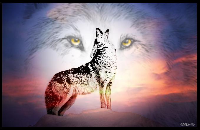 волк картинки тоска
