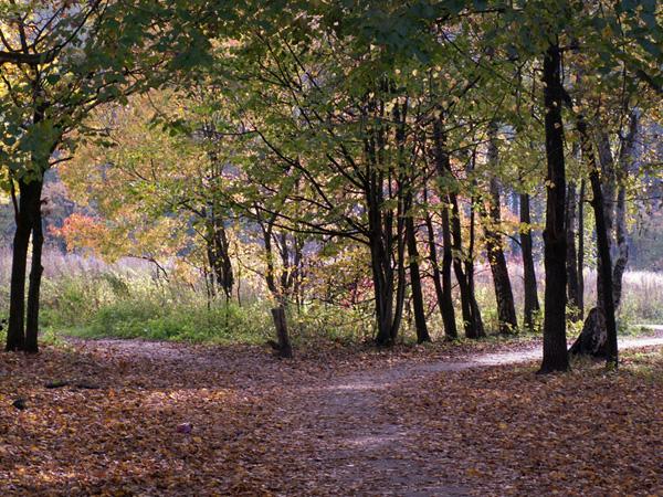Картинки природы в октябре месяце с дождем
