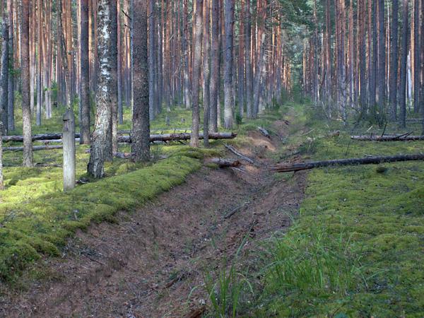 За лесом 1949  фильм бесплатно