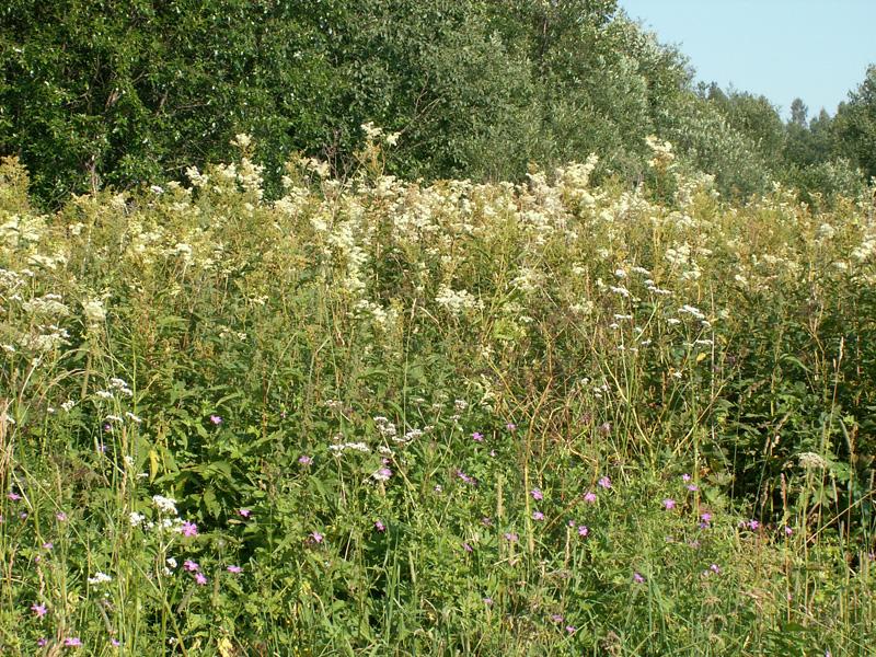 целебные травы от паразитов