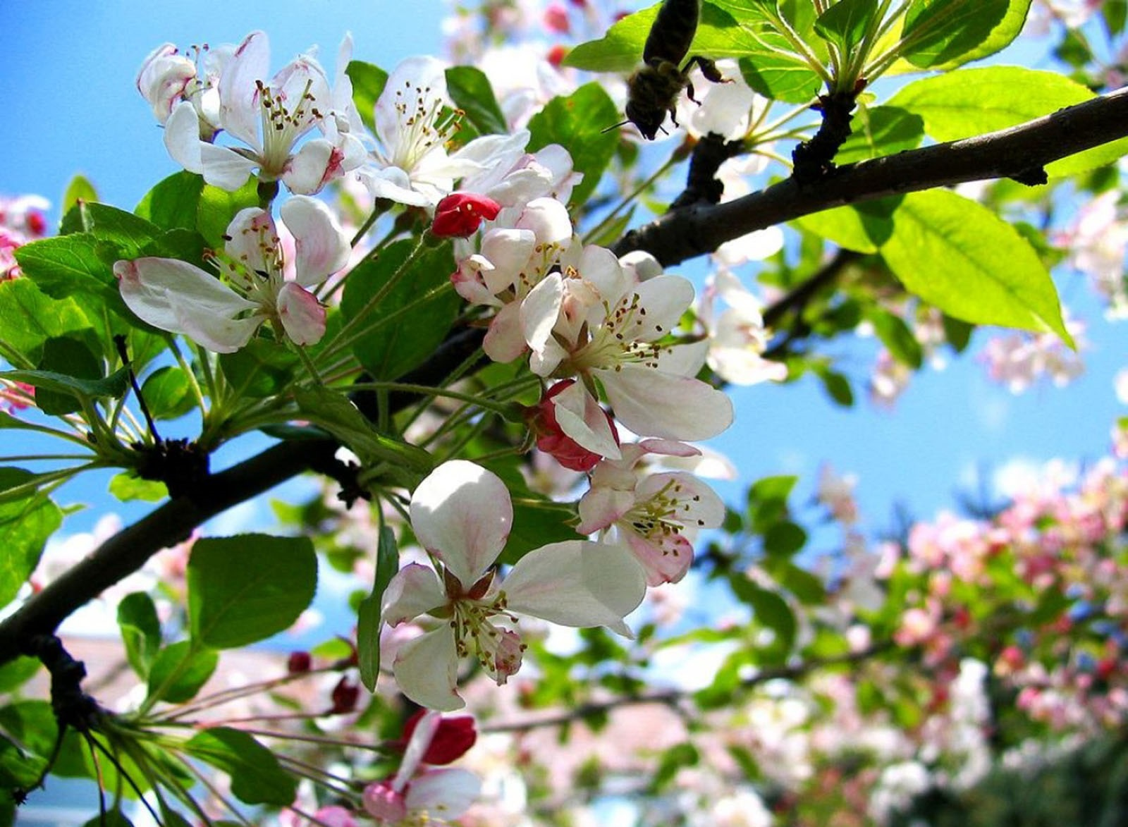 работы, тесты, а на україні розквітають сади проверенные квартиры!Проектная декларация
