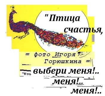 (= Увеличить! =) Птица счастья, выбери меня, фрагмент оформления книги, фотомонтаж дизайн и редактирование Игоря Горюшкина