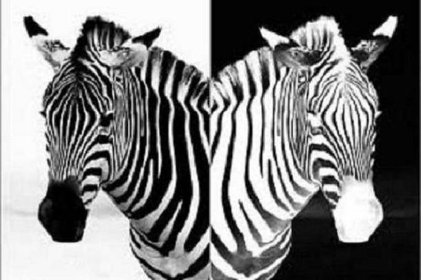Позитив-негатив (Черно-белый дресс-код) [фотомонтаж из Интернета]