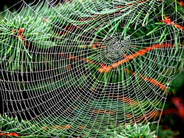 паутинная сеть для ловли летучих мышей