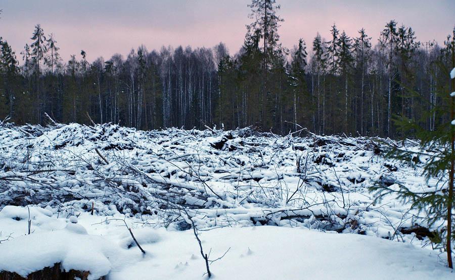 не законная вырубка деревьев в тобольске состав