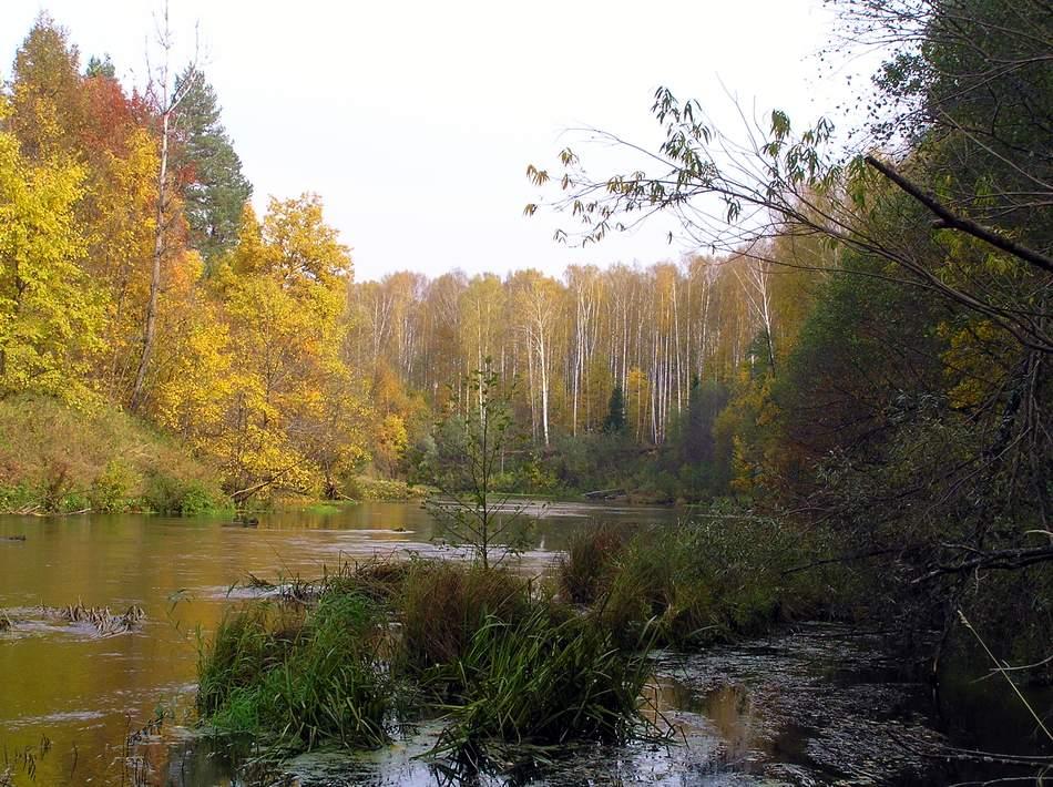 Плёс пойма реки илеть – марий чодра