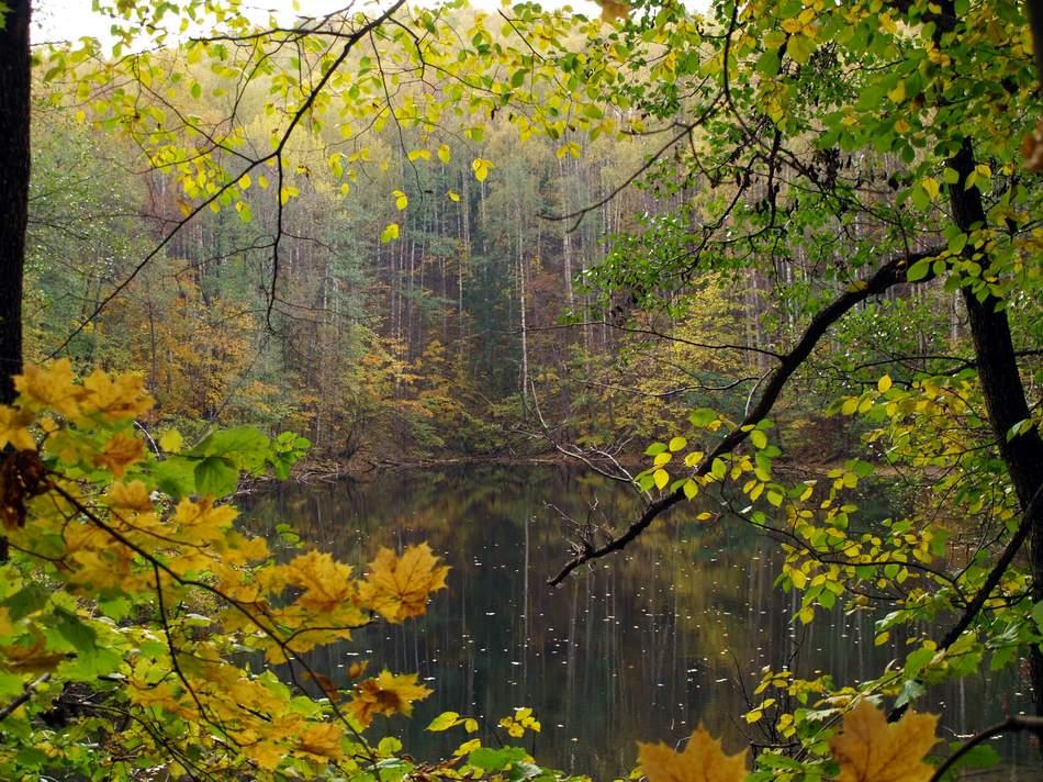«Марийский лес»