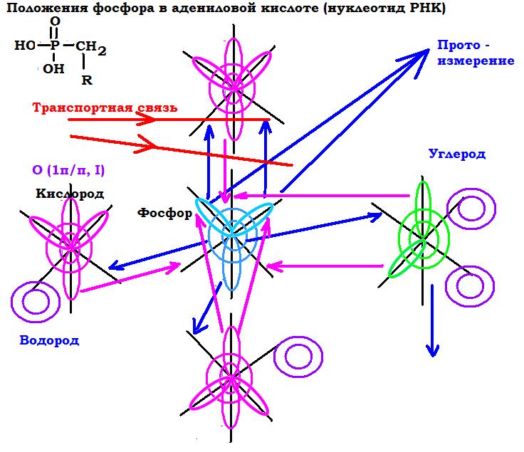 Прото и Просто измерения.  Строение атома и его эволюция.