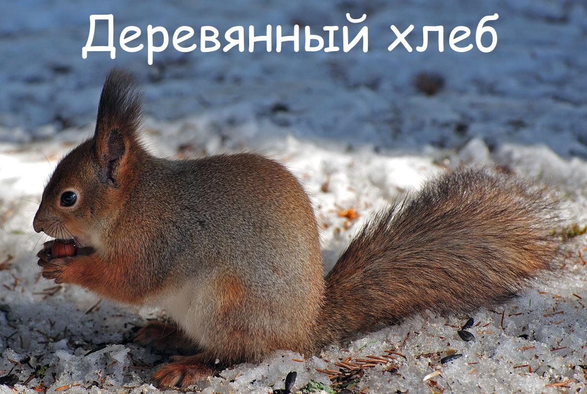Белка зимой Павел Алексеевич Кучер
