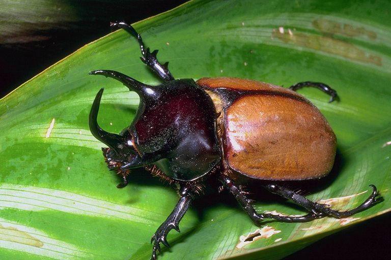 Обыкновенные насекомые.  Шесть лап, хитиновый панцирь, фасеточные глаза.  Их слишком много для меня...