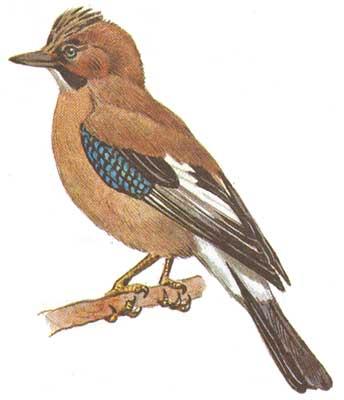 Есть в лесу одна птица,которая заготавливает себе корм на всю долгую зиму.Зима ей не