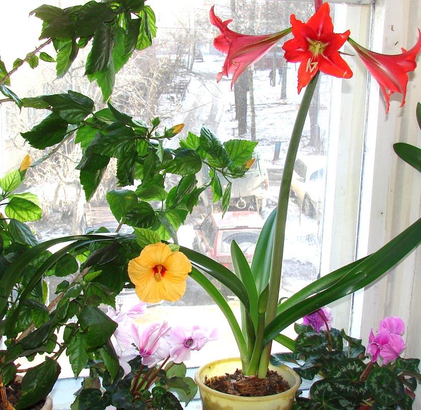 Смотреть комнатных цветущих цветов 52