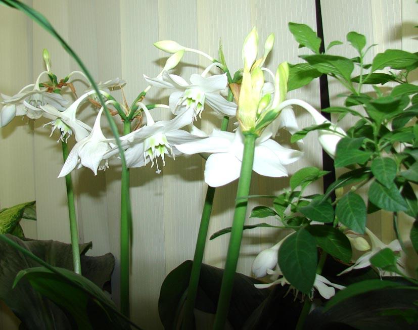 названия домашних цветов с картинками: