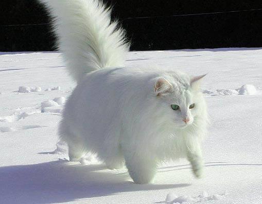белый кот юрий:
