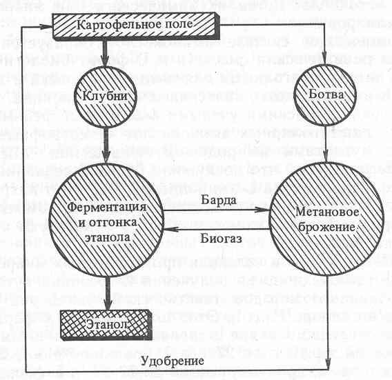 Курсовая работа: Производство этилового спирта из картофеля.
