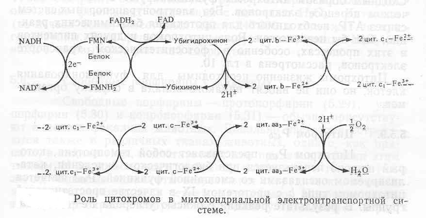 Цепь Переноса Электронов фото