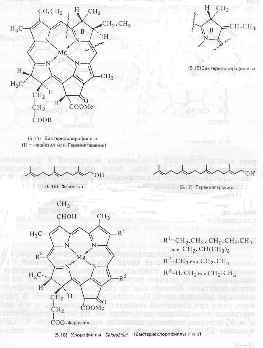 Уропорфирин