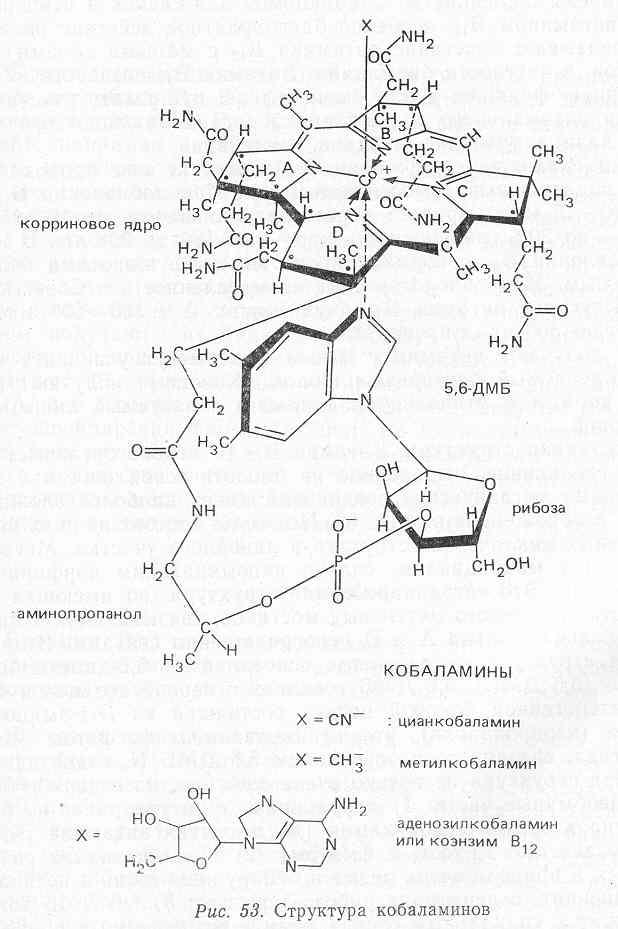 Кобаламин фото
