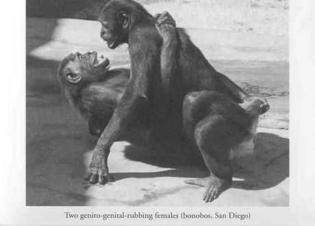 http://samlib.ru/img/r/reznikow_k_j/demandsofthefleshparti/460_0___30_0_0_0_0_0_bonobo_female_sex.jpg
