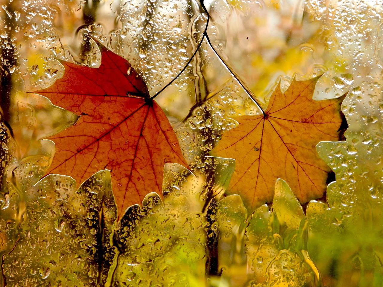 Фото золотой дощ 9 фотография