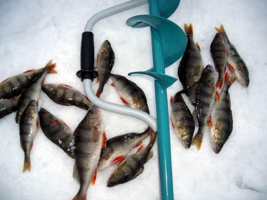 Какая рыба клюют на прудах лучше