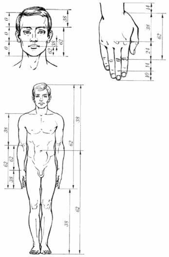 в частях тела человека