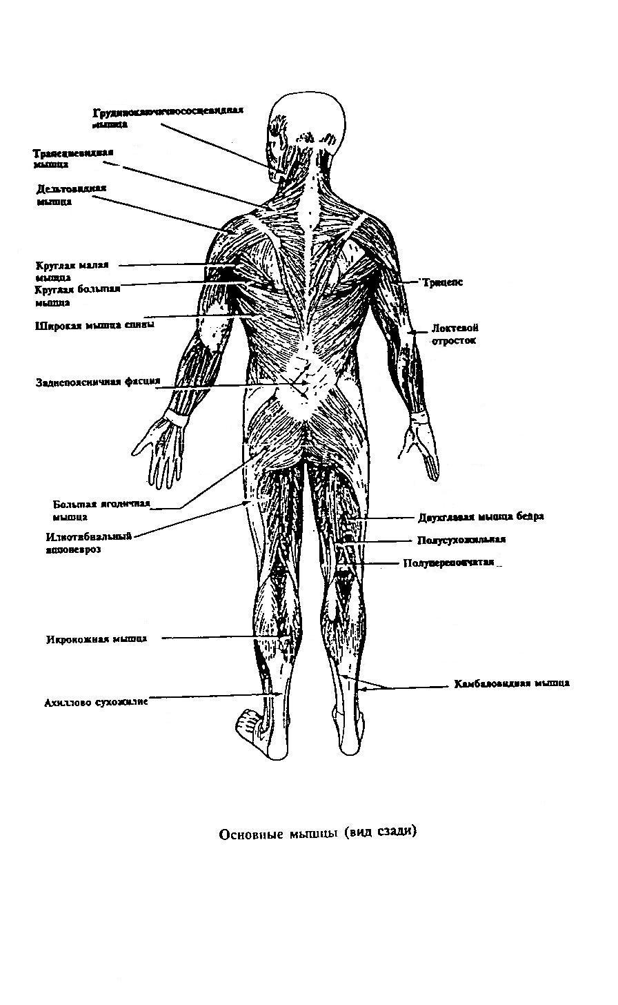 Сексуальный массаж половых органов мужчины 8 фотография