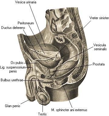 Порно анотомия от женщины