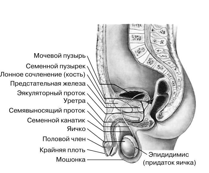 mozhet-li-zarasti-vagina