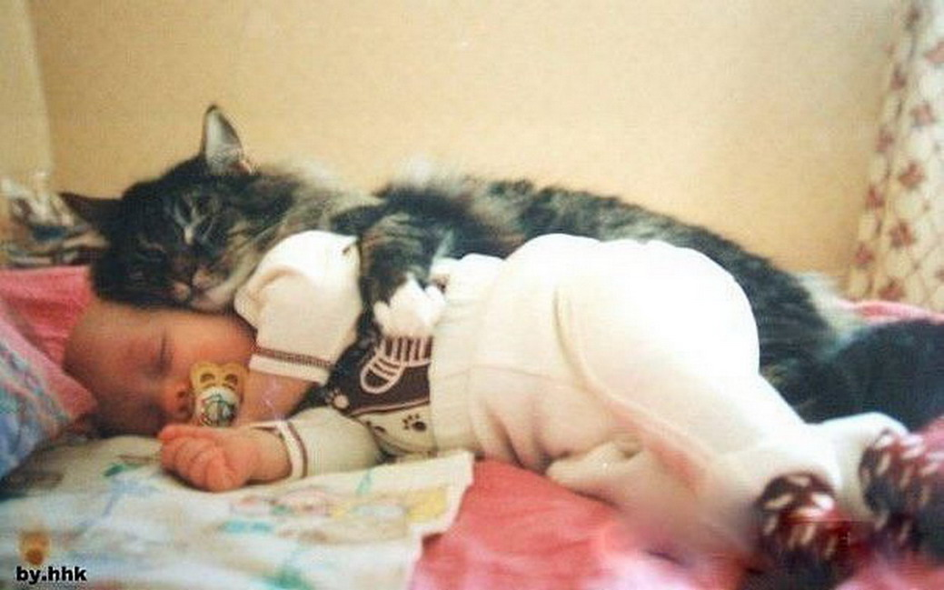 Сонник свой кот на руках