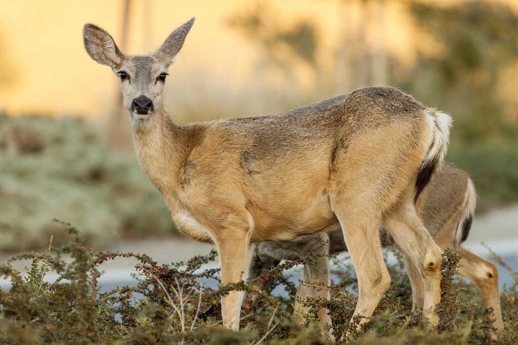 whoso list to hunt translation