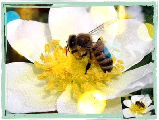 бджола [evaseva]