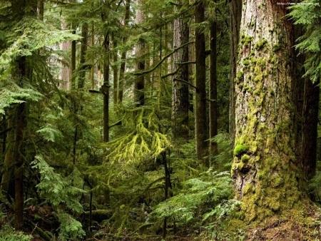 фото лес дремучий