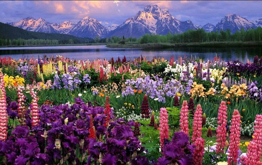Фото с горами и цветами