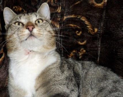 Нарыв у кота шея