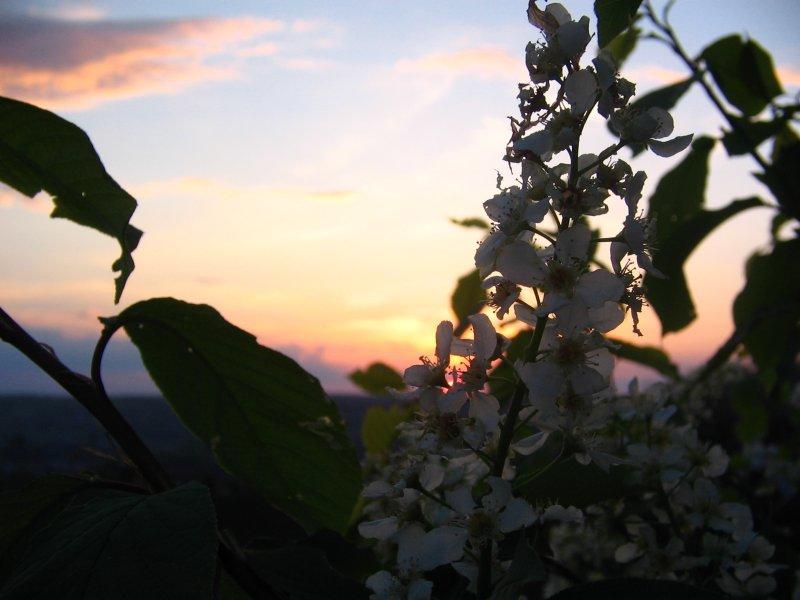 "Image result for фото ""Вечерний сад"